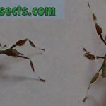 recién nacido insectos hoja